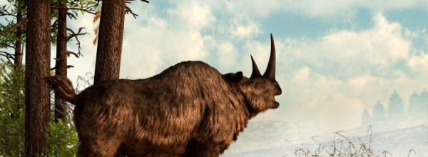 It's Not Everyday You Go Out Hunting And Find A Frozen 10,000-Year-Old Baby Woolly Rhino
