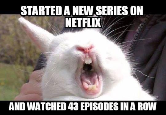 Funny Animal Memes For Adults : Funny animal memes nice pics
