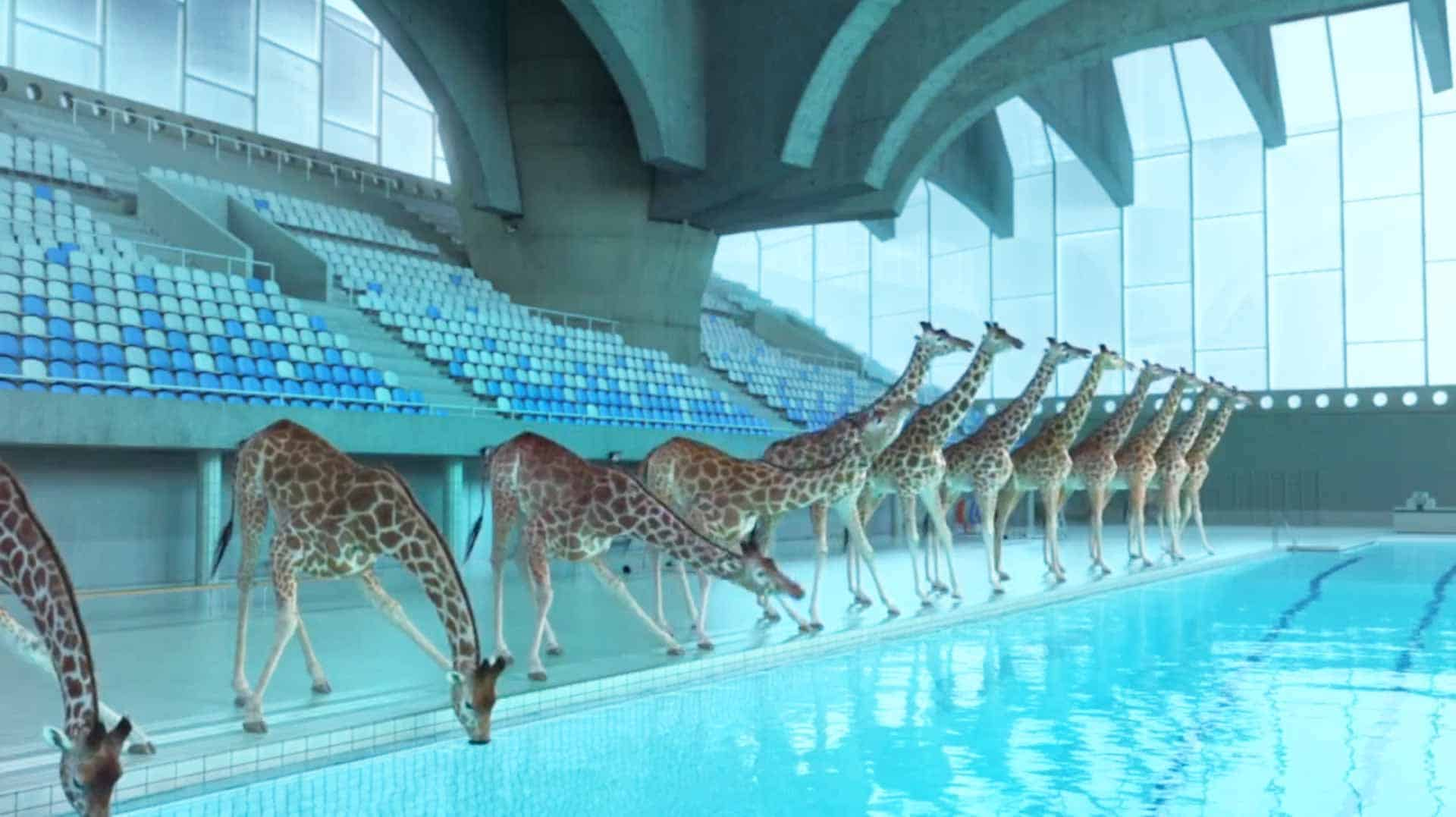 Incredible Animated Short Film Featuring Giraffes High Diving Into A Swimming Pool