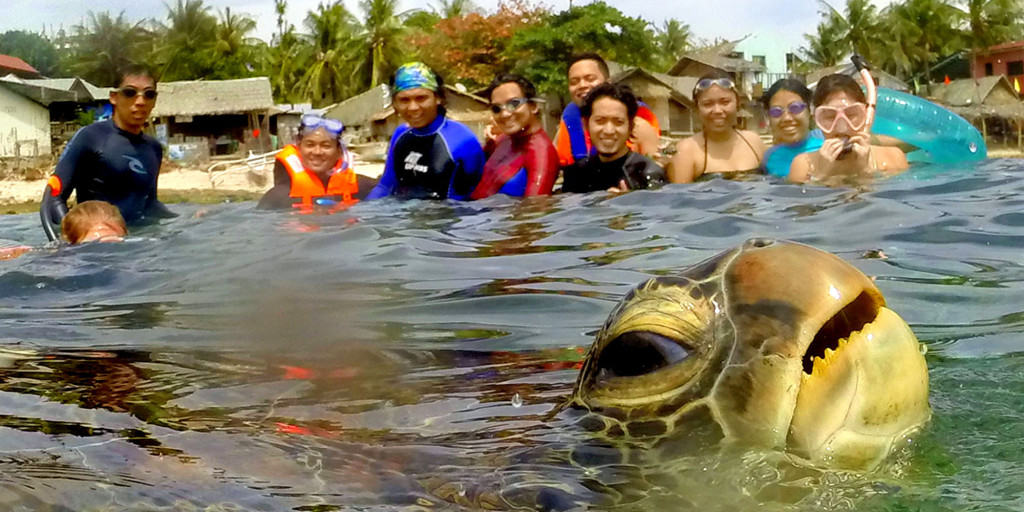 Photobomb Turtle