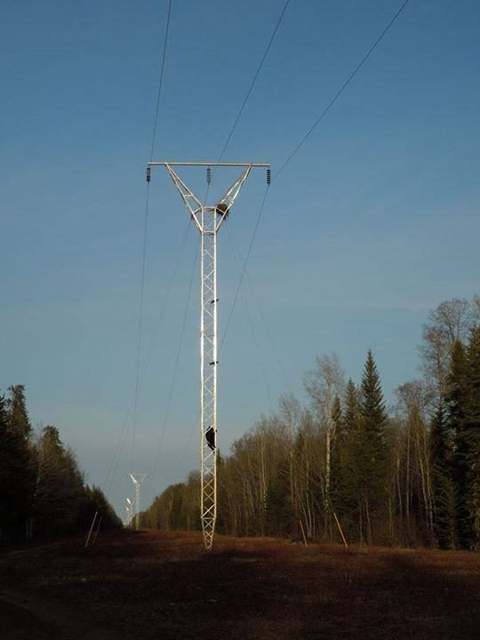 bear electric pole