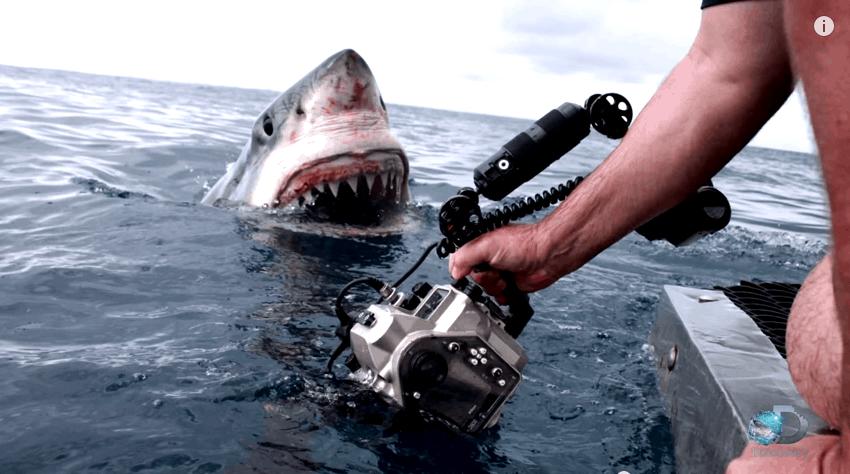 close up shark