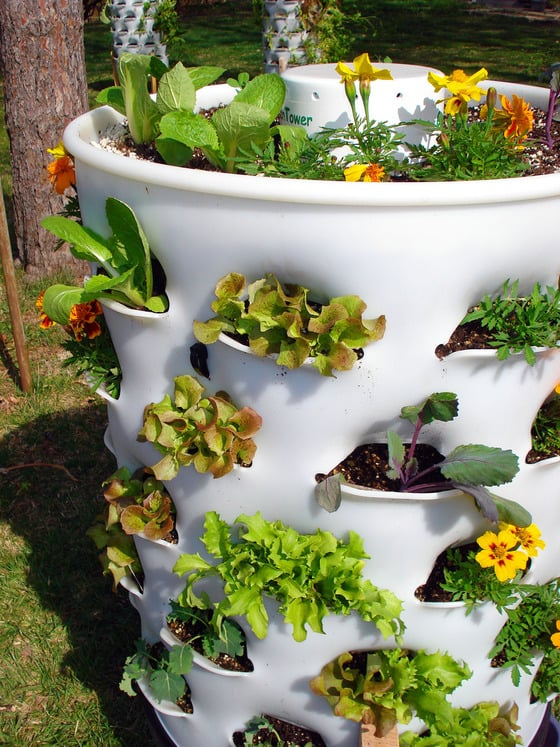 How To Grow A 53 Plant Garden In Just 4 Square Feet Of Space