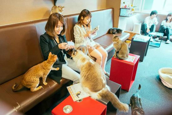 catcafe3