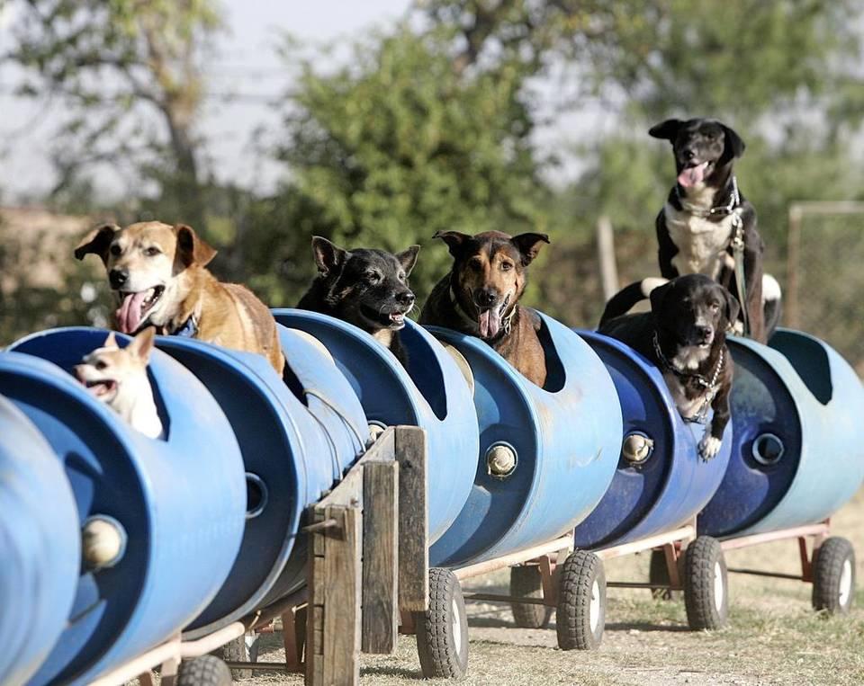 dog train6