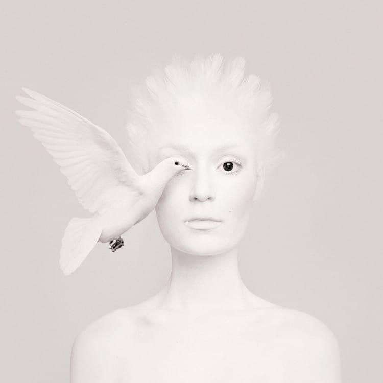 Dove (1)
