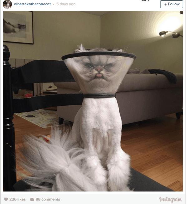 cone cat