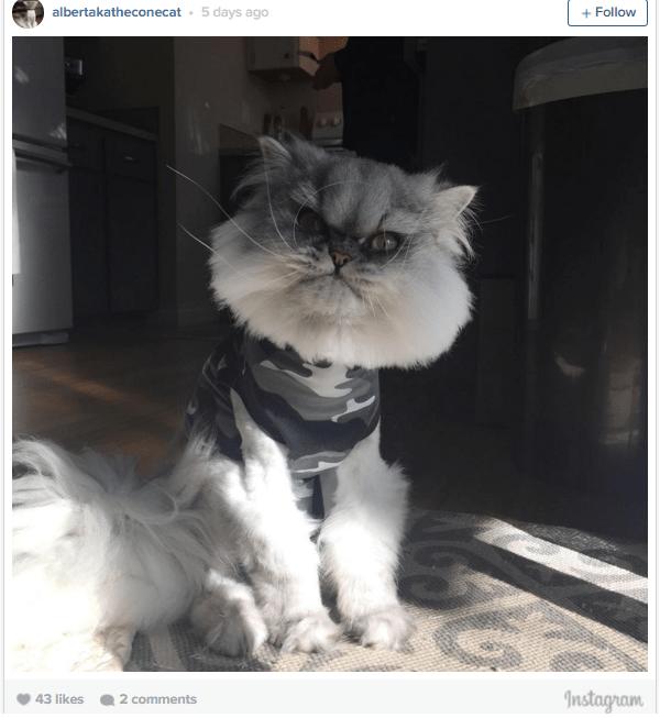 cone cat2
