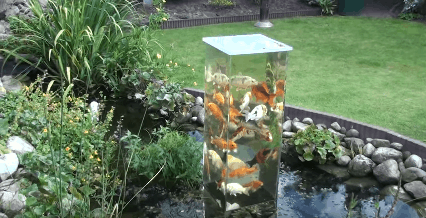 The coolest upside down koi pond that will spice up your for Backyard koi fish pond