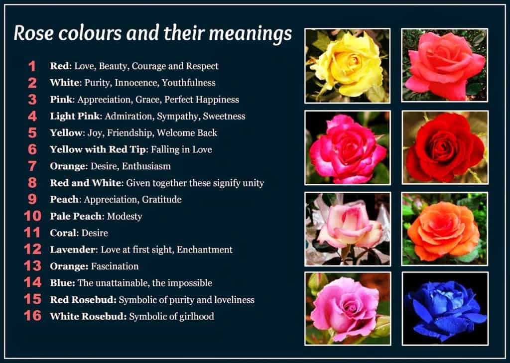 The flower color meaning charts every man must see for Meaning of flower colors