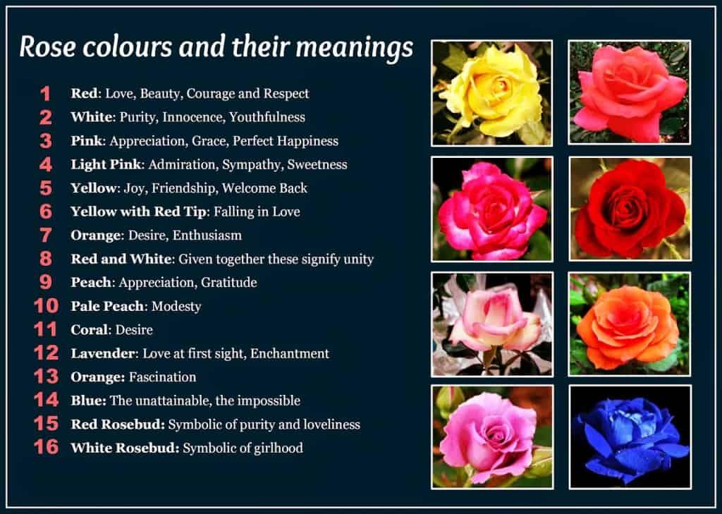flower chart1