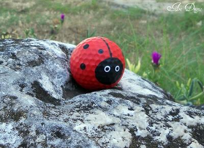 ladybug8
