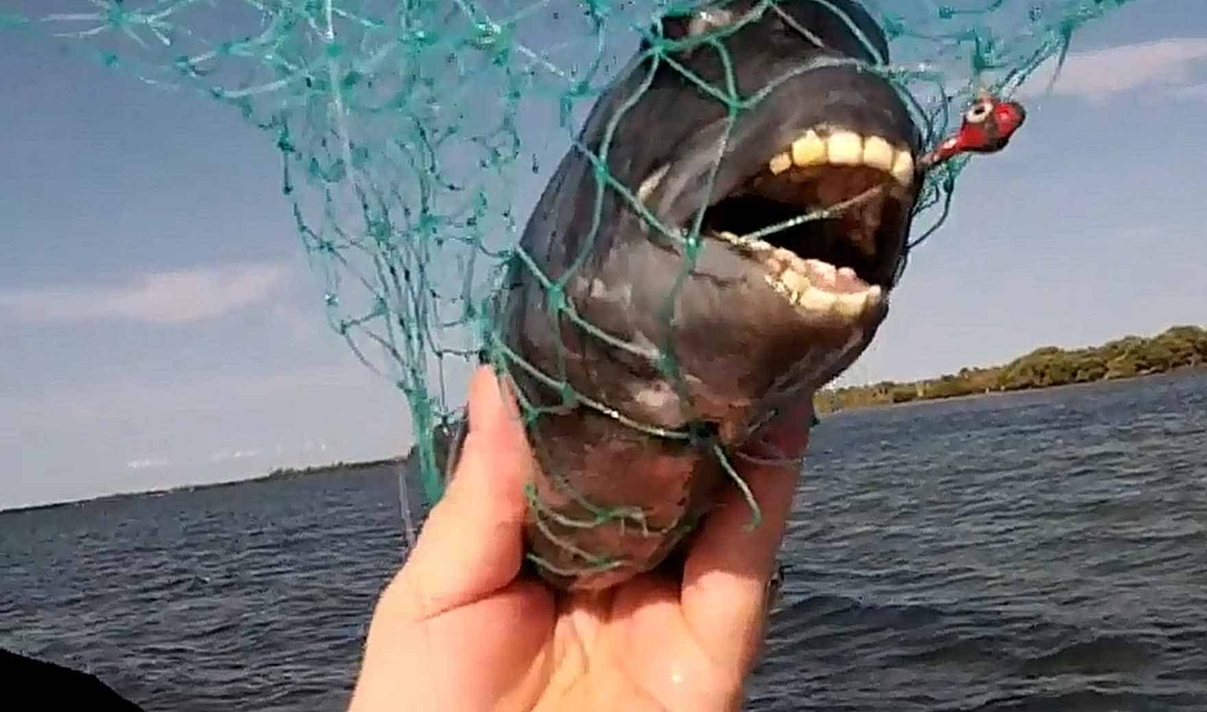 This Super Freaky Looking Fish Has Human Like Teeth ...