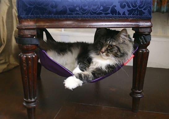 cat crib2