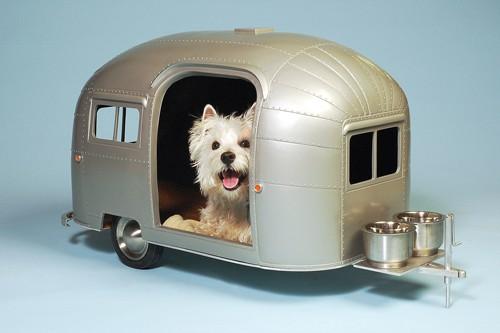 dog camper air