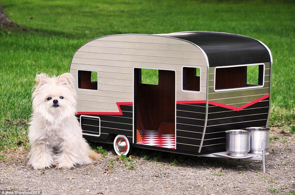dog camper1