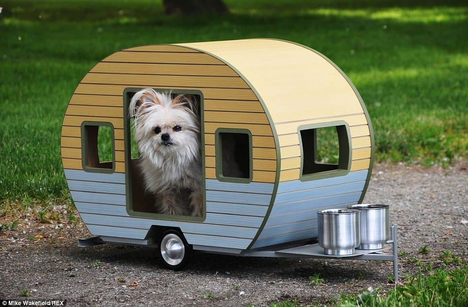 dog camper3