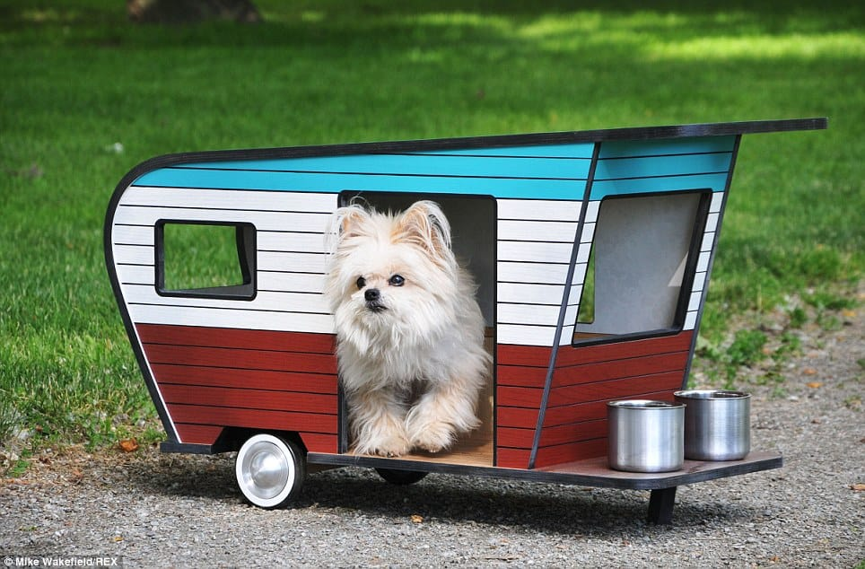 dog camper4