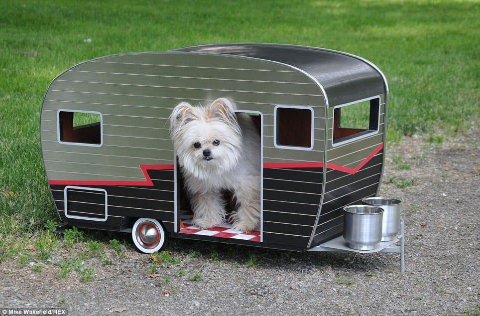 dog camper6