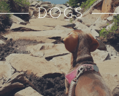 dogs hiking
