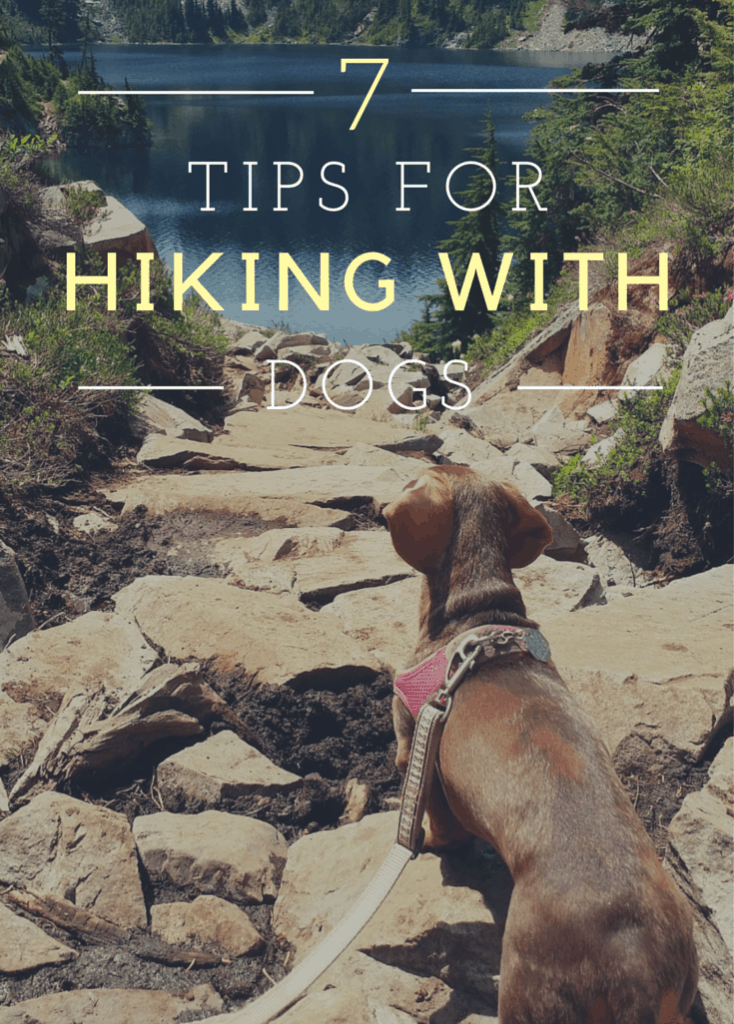 dogs hiking3