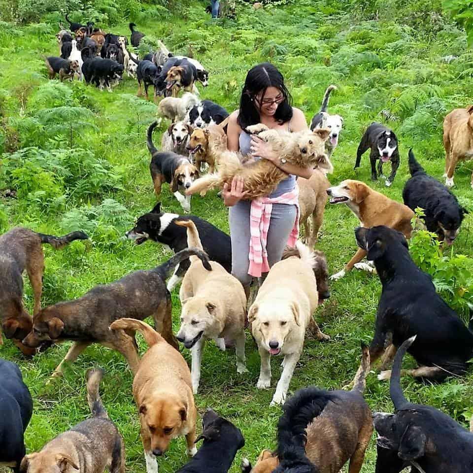 dogs roaming3