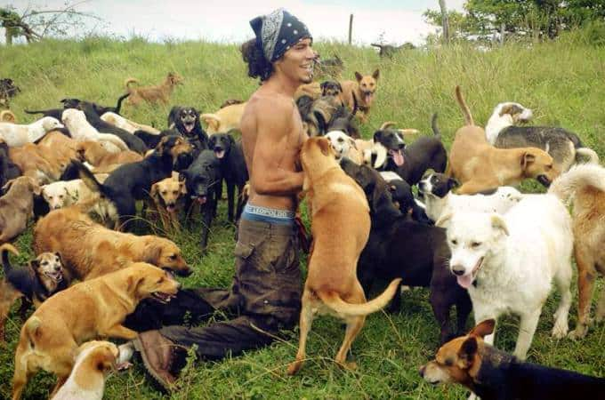 dogs roaming5