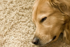 This Pet Stain Cleaning Hack Is A Must Know If You Are