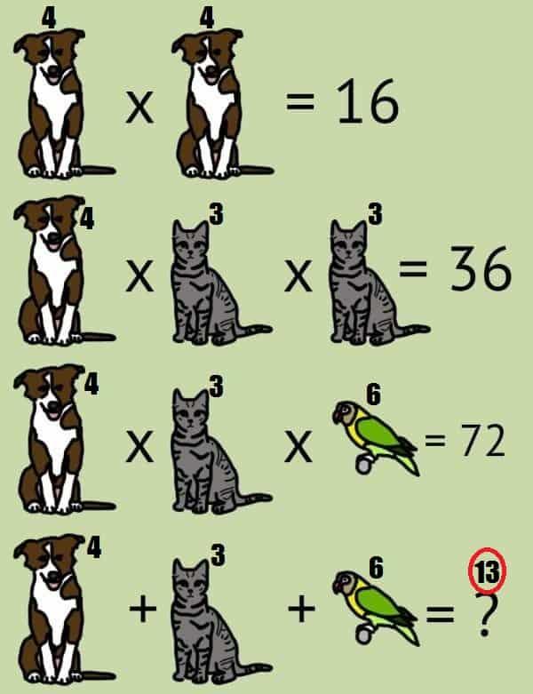 animal problem solved