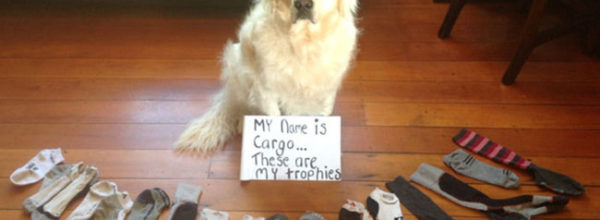 20 Hilarious Struggles Only Dog Owners Will Understand!