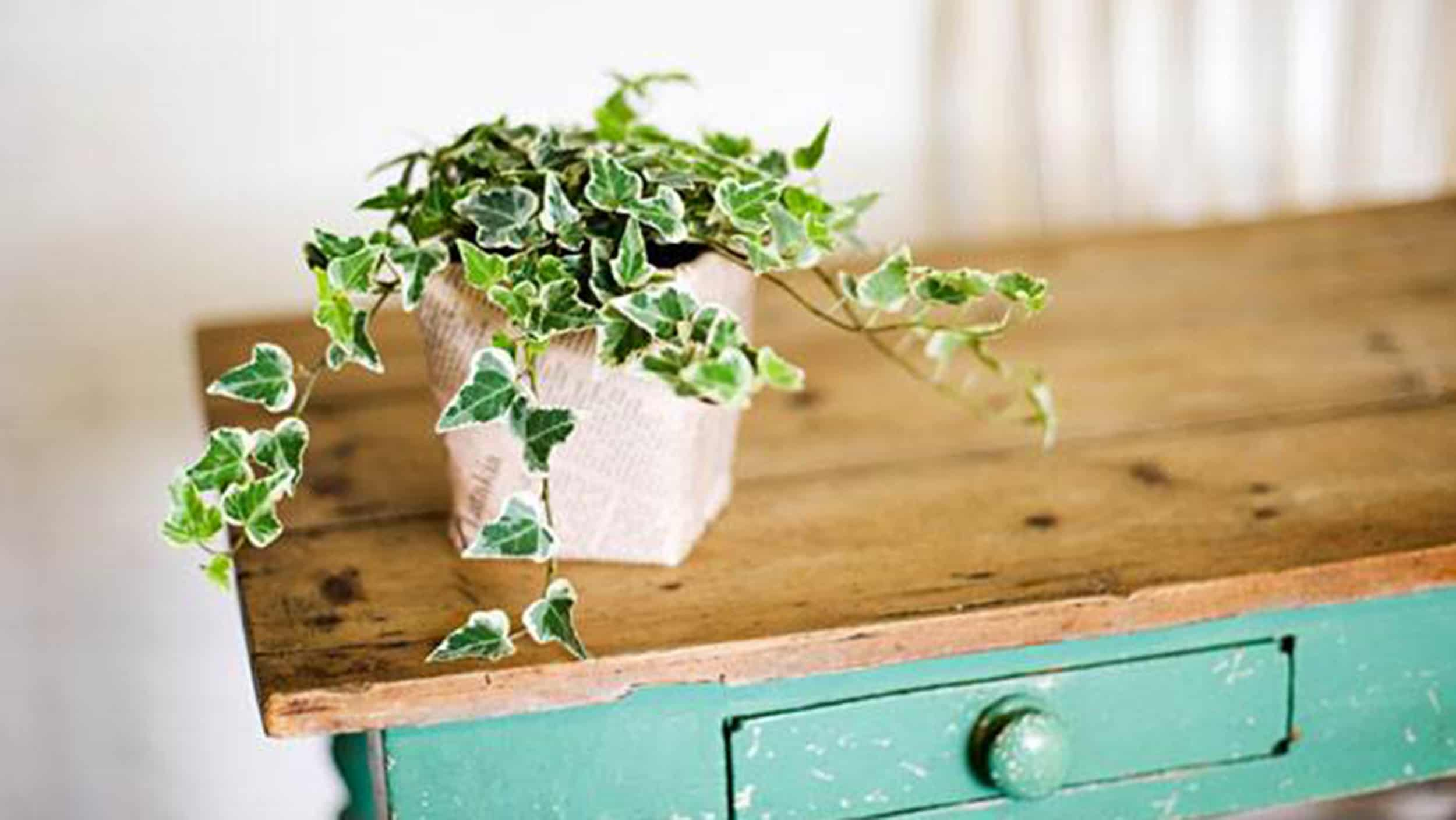 6 Indoor Plants That Will Absorb Humidity In Your Home U2022 AwesomeJelly.com