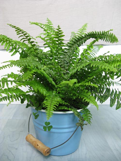6 indoor plants that will absorb humidity in your home - Five indoor plants that absorb humidity ...