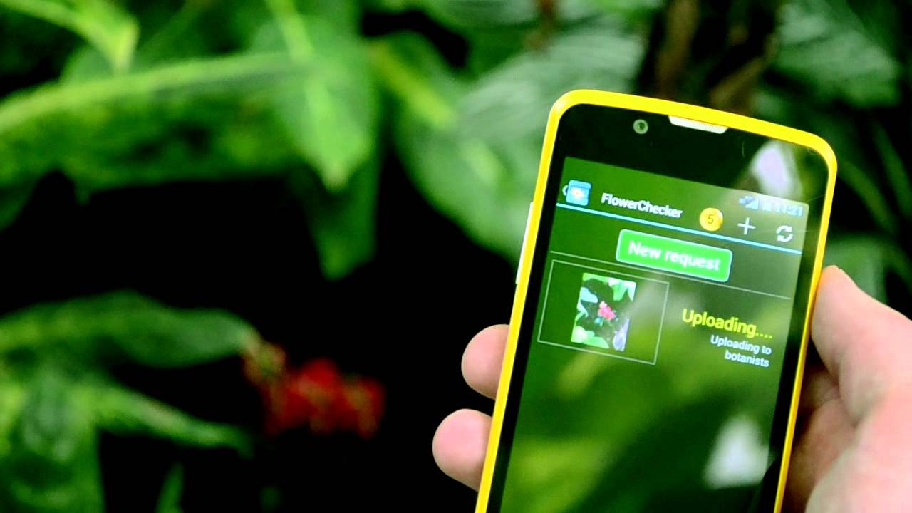 The 8-Best Apps To Identify Unknown Plants And Flowers ...