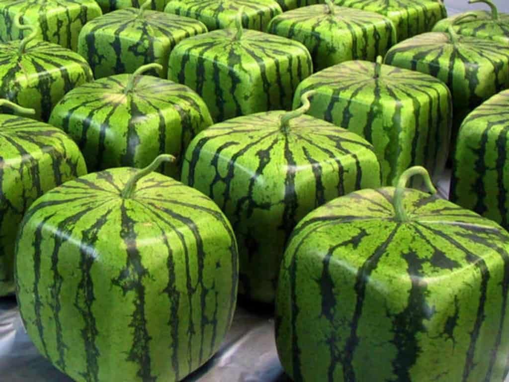 Grow Square Shaped Fruits Amp Vegetables To Get Kids Excited