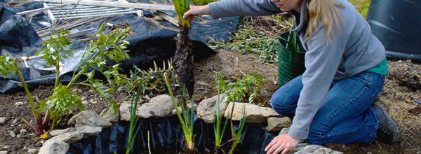 Spice Up Your Backyard & Garden With This Small DIY Wildlife Pond!