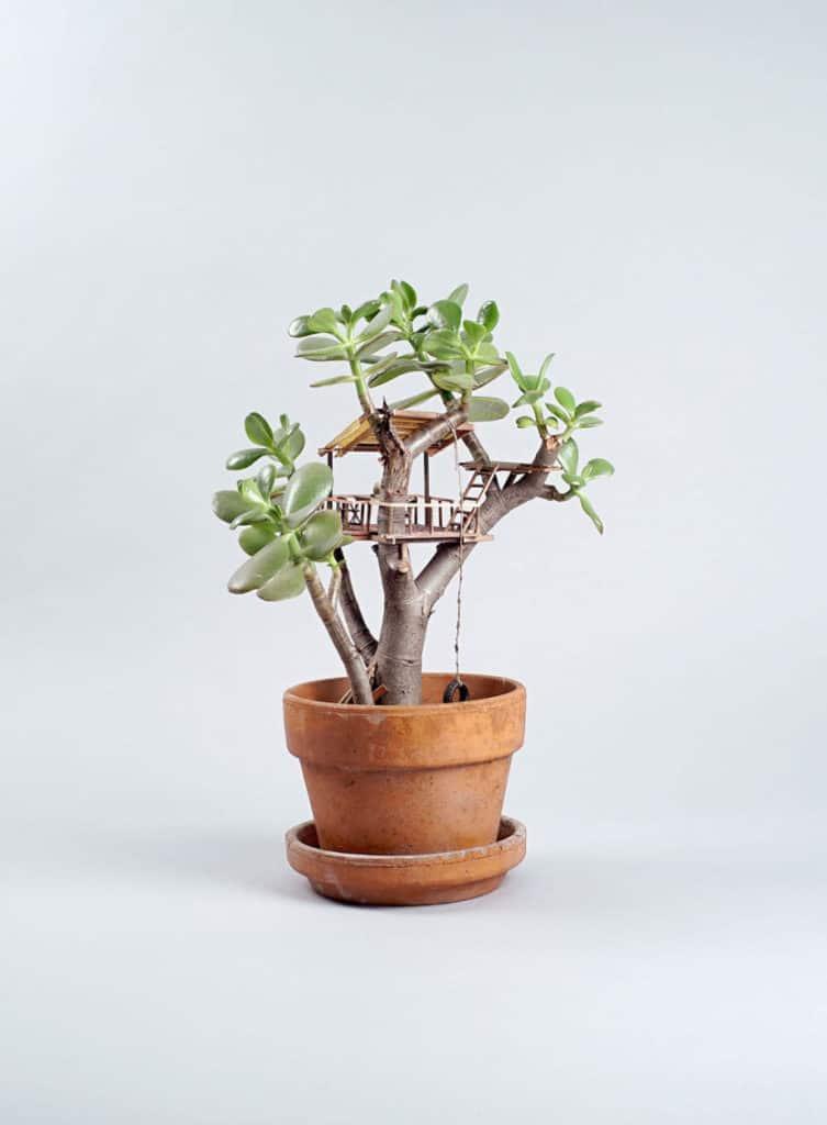 houseplants4