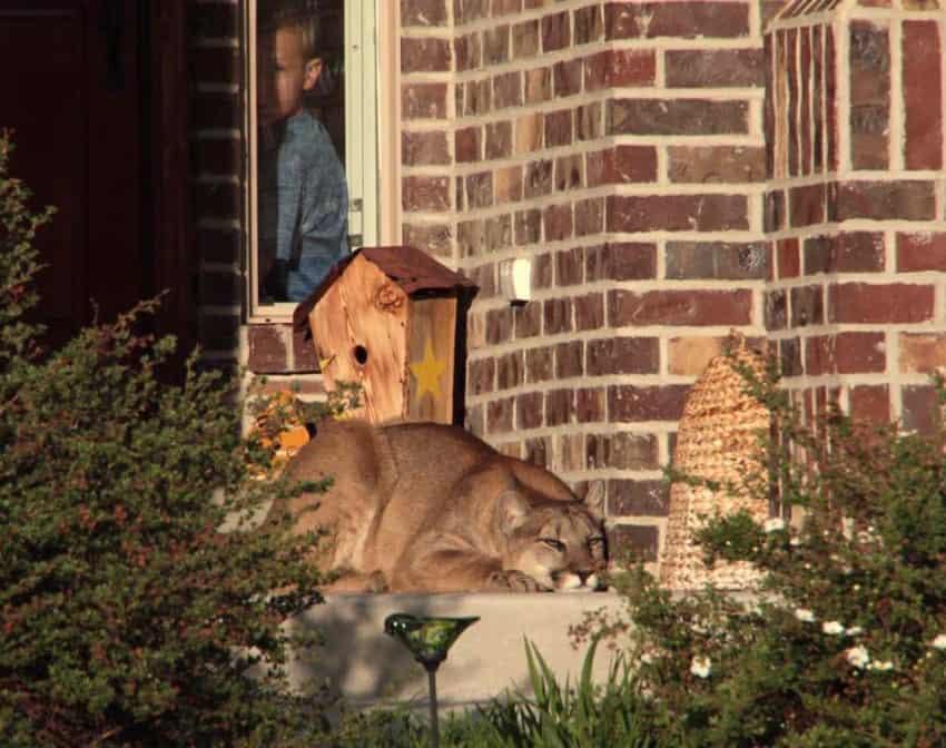 House Cat Attacks Family