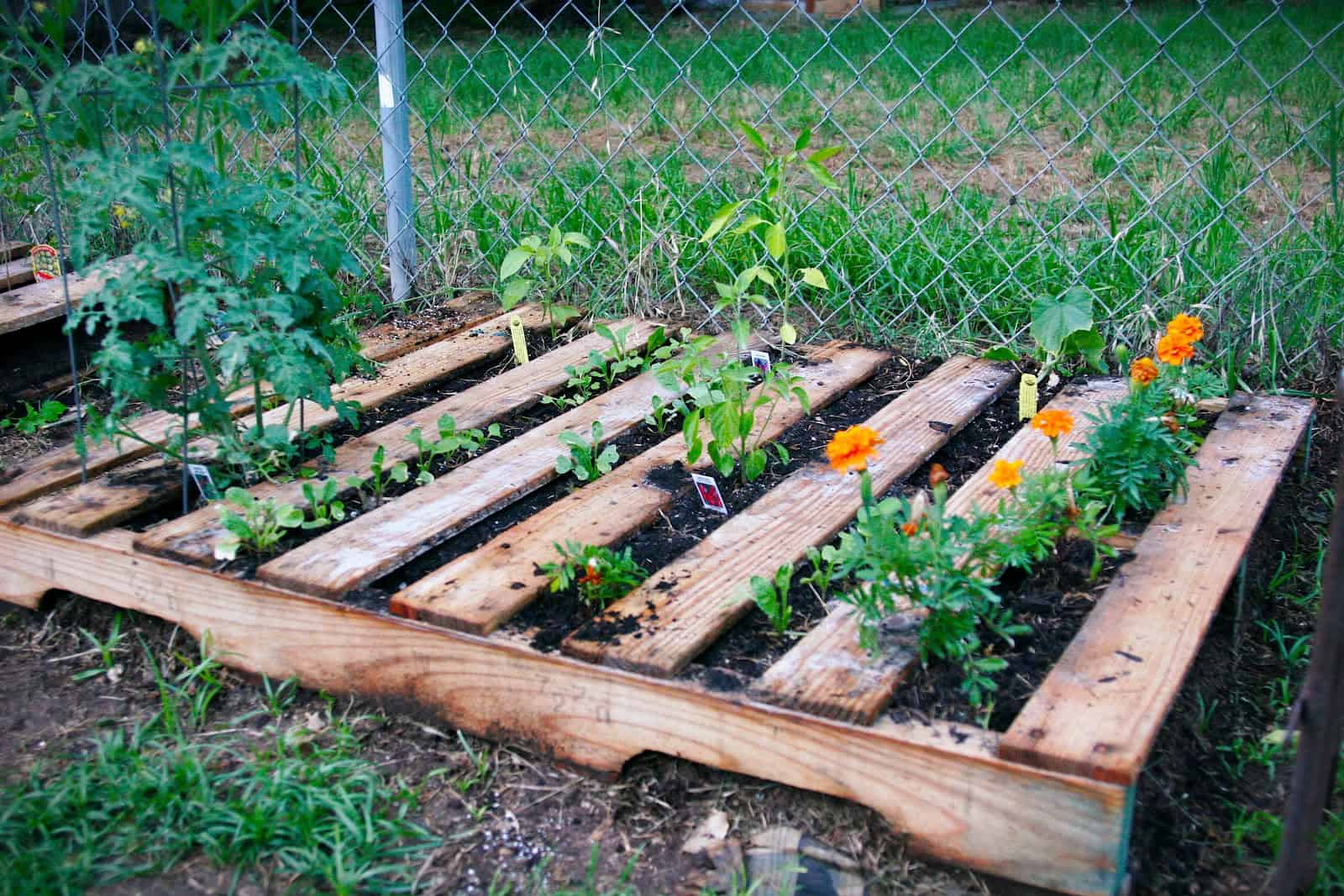 How to make a weedless raised wood pallet garden bed for Pallet garden ideas