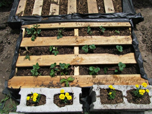 how to make a weedless raised wood pallet garden bed