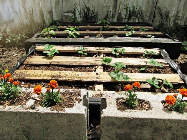 pallet garden8