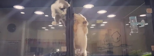 Rebel Kitten Escapes Pet Store Enclosure To Join Lonely Puppy In Neighboring Cage