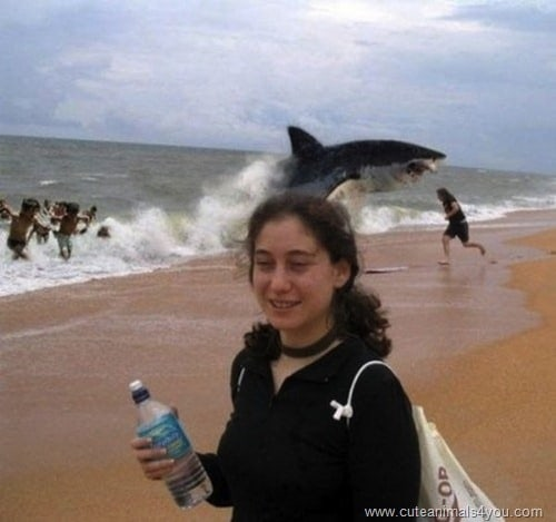 Of The Best Animal Photobombs Ever Captured AwesomeJellycom - 35 hilarious animal photobombs ever