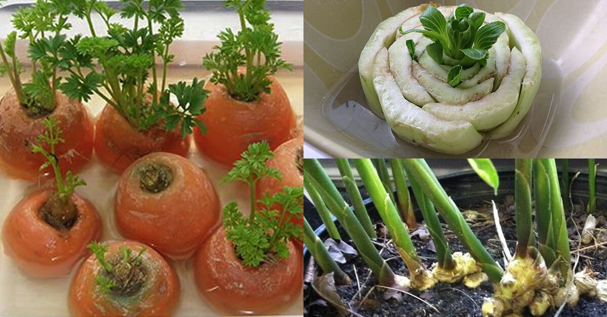 How to Regrow Vegetables How to Regrow Vegetables new picture
