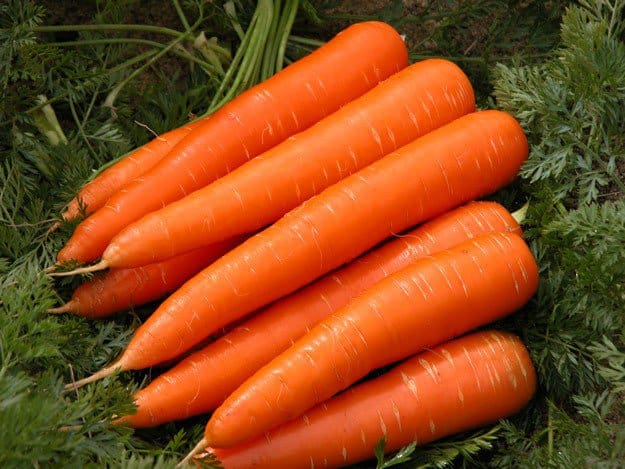 What-to-Plant-for-a-Successful-Fall-Harvest-Carrots