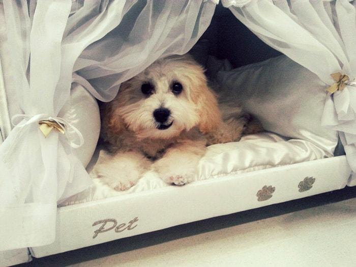 bunk pet3