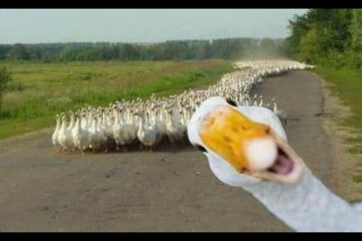 funniest-animal-photobombs-02