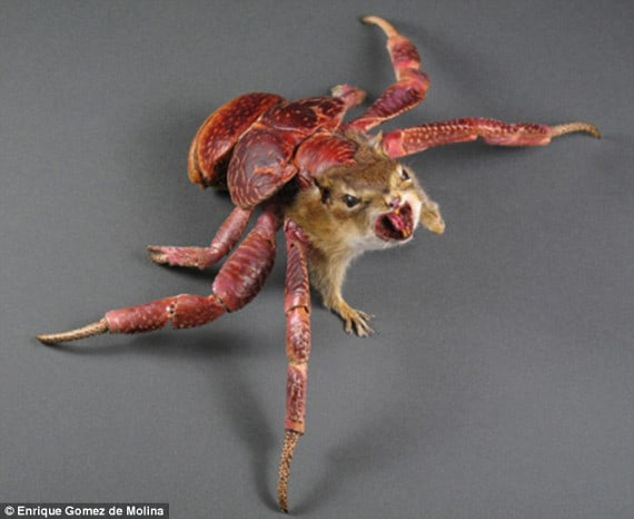 taxidermy-endanger-species-2