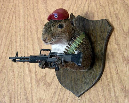 taxidermy-squirrel