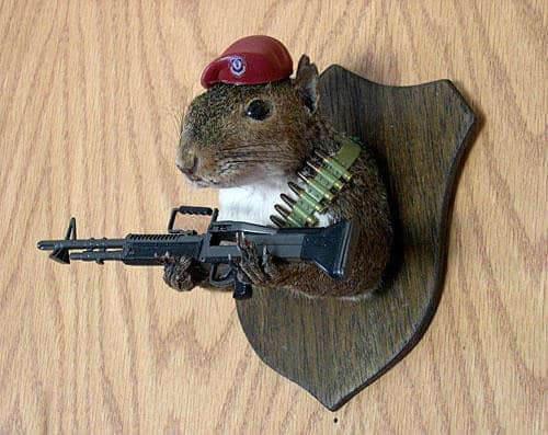 taxidermy-squirrel