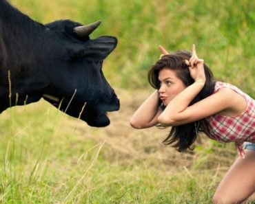 woman-making-funny-face-in-front-cow